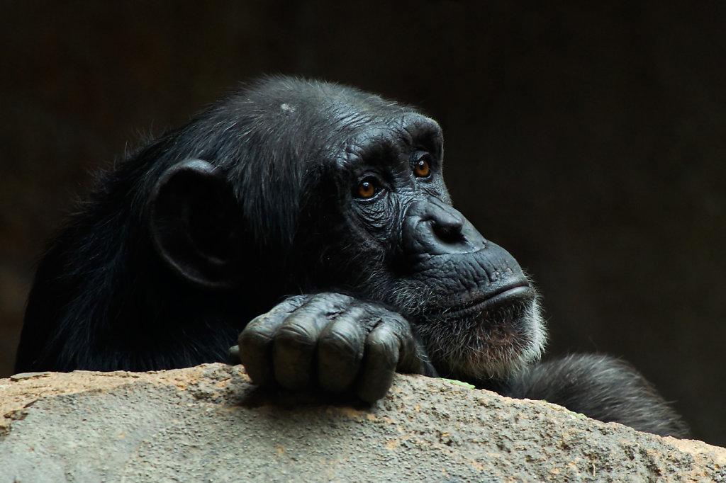 Zoo Leipzig 2013
