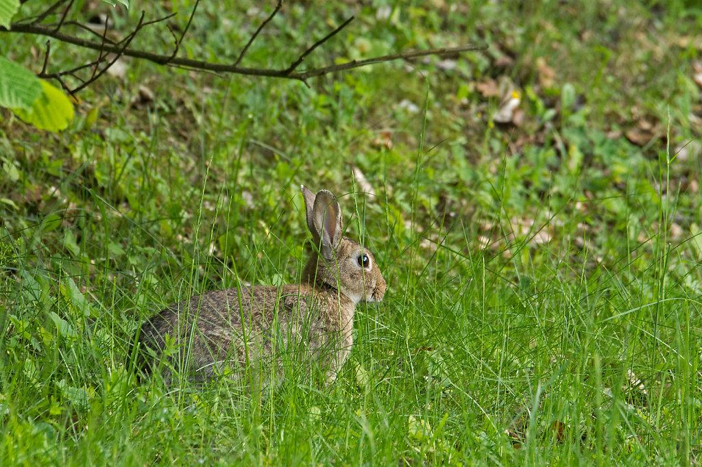 Kaninchen am Katharinenberg