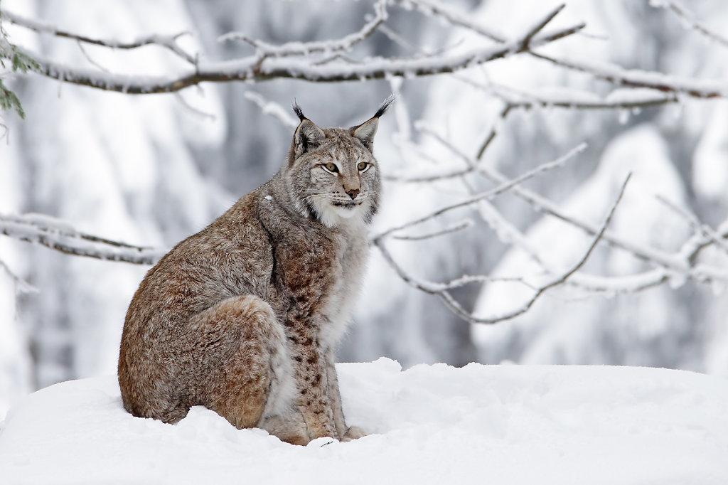 Winter im Wildpark