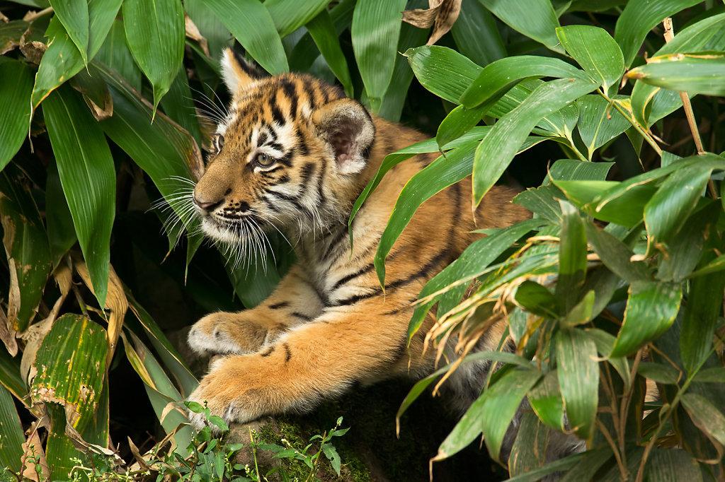 Fast wie im Dschungel