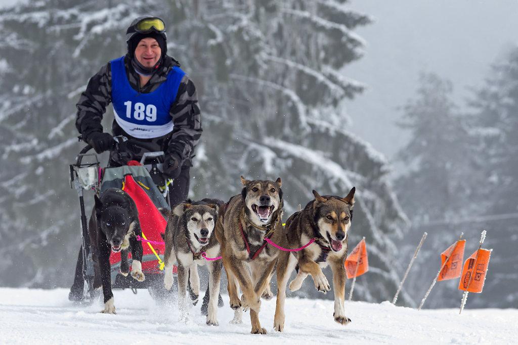 Schlittenhunderennen Oberwamensteinach 2015